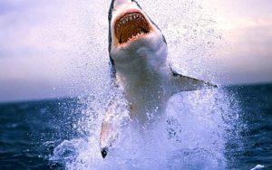 Selacofobia: Miedo a los tiburones