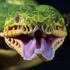 serpiente tripofobia